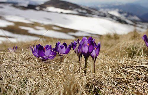 Spring Begins - Jo Townsend Wellbeing